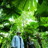 Full Day Tour Daintree Rainforest | Departs From Cairns & Port Douglas