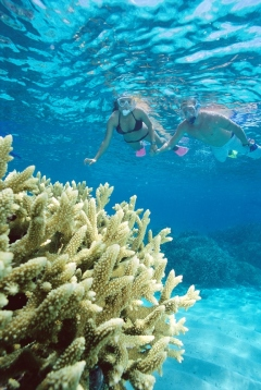 You And Your Teenagers Will Love Snorkelling The Great Barrier Reef Off Port Douglas Tropical North Queensland