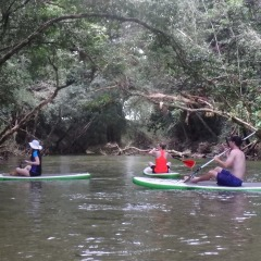 Paddle Boarding | Stand Up Paddle Boarding | Mossman Gorge