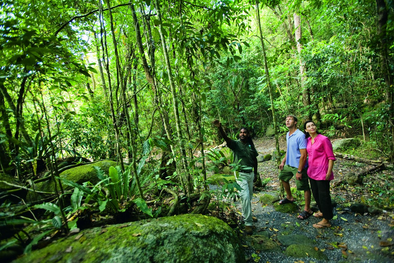 Jungel Tours Cairns