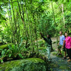 Explore The Daintree Rainforest | Full Day Tours