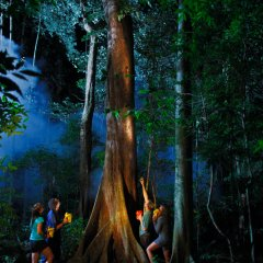 Your guide will point out the rainforest creatures