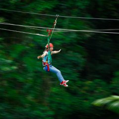 Zip lining Jungle Surfing Cape Tribulation & Daintree Rainforest