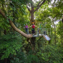 Zip Lining Through The Rainforest | Tropical North Queensland Activity For The Whole Family | Stay 2 Day 1 Night