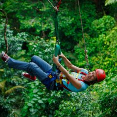 Zip lining thru the trees in the Daintree & Cape Tribulation Rainforests