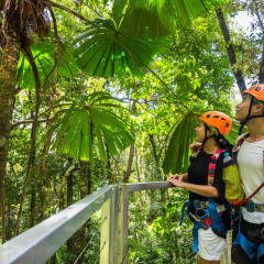 Zipliners' marvelling at the Daintree Rainforest - - Daintree Cape Tribulation Ziplining Tour