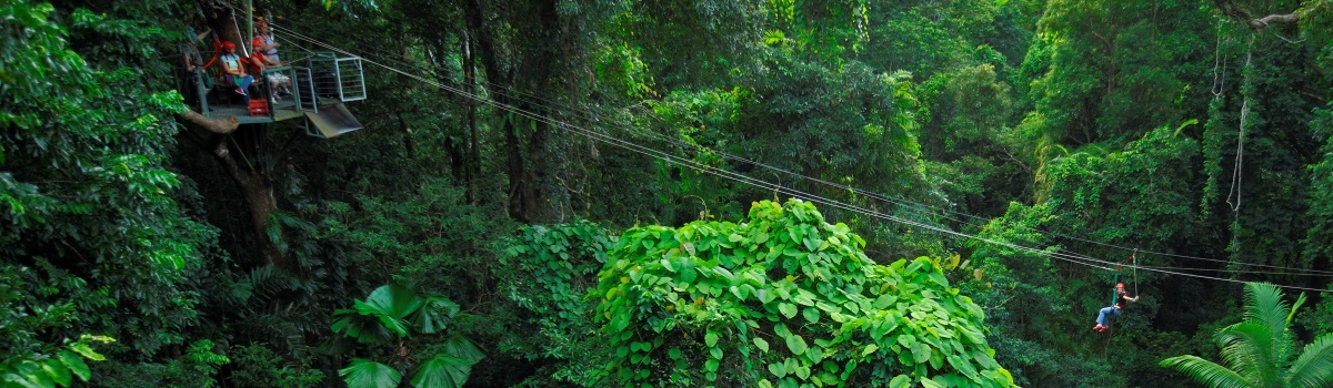 Ziplining thru World Heritage pristine rainforest jungle in the Daintree Cape Tribulation region